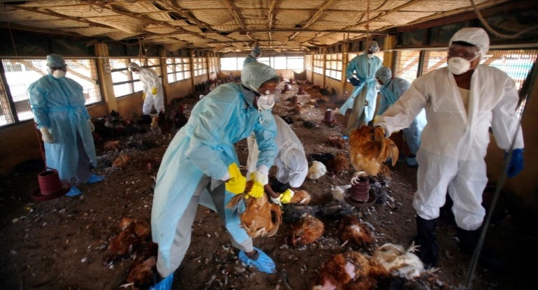 India hit by Bird Flu, Is Nepal next?