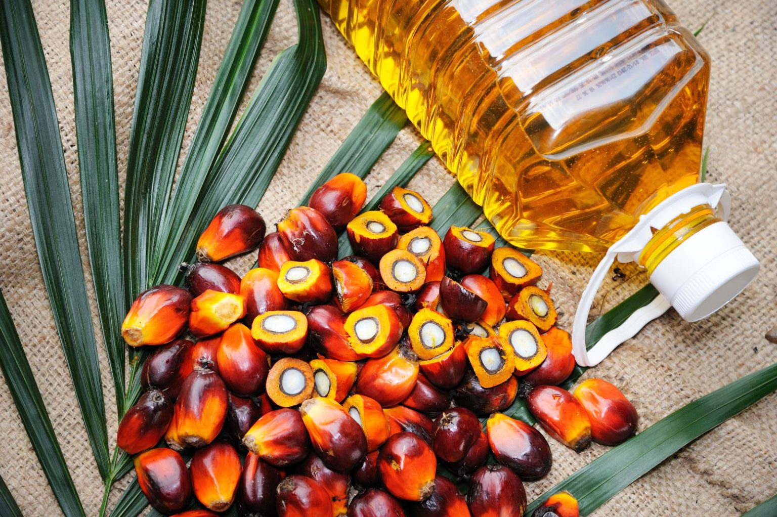 Big Nepali investments in oil processing at risk after India's palm oil ban