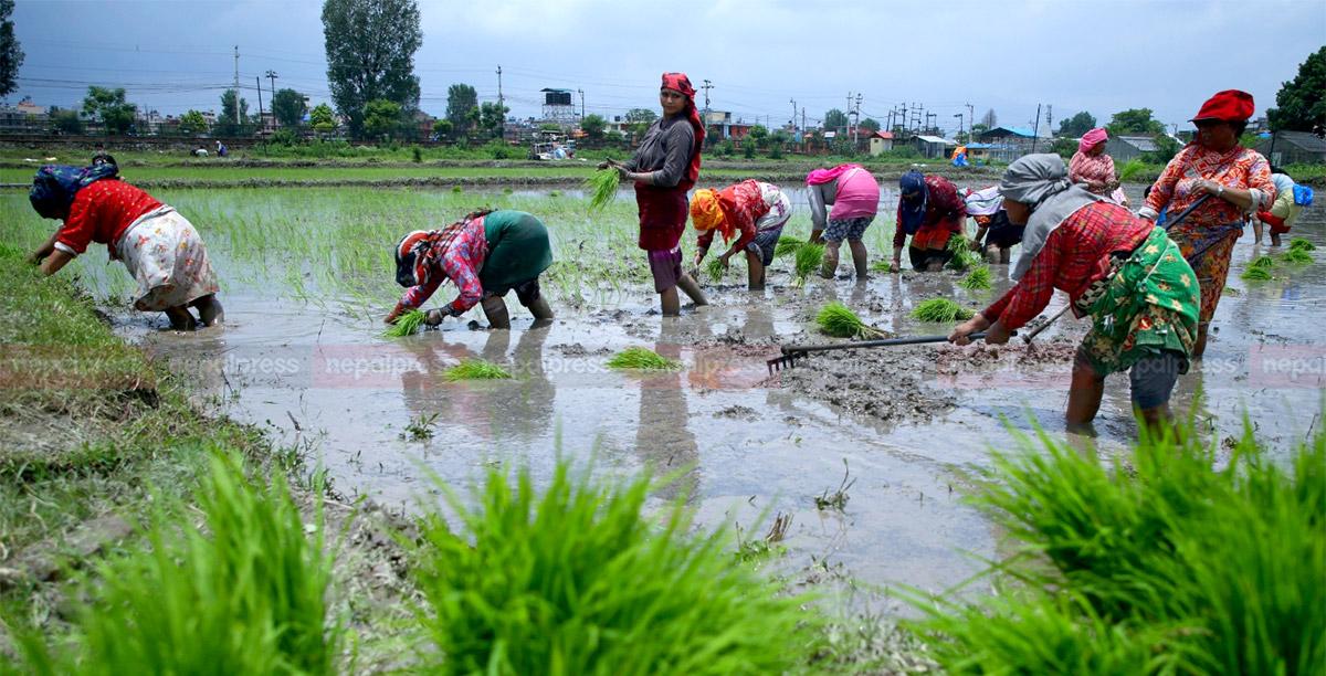 Celebration of National Paddy Plantation Day