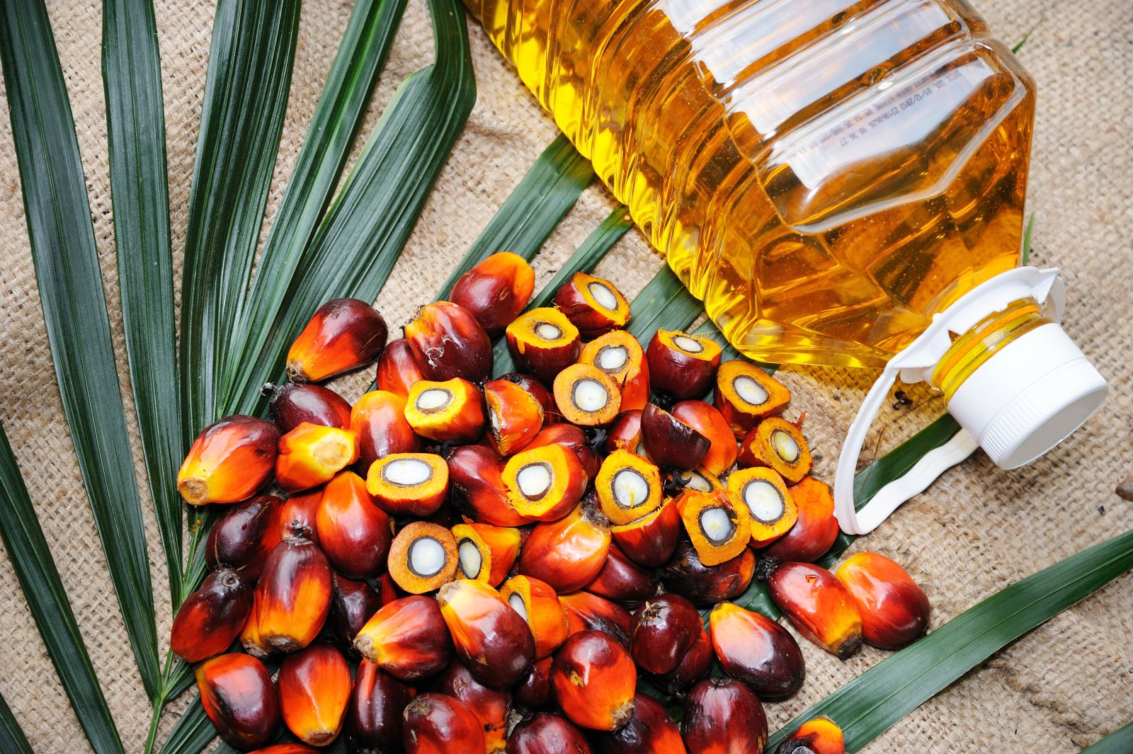Export trade of Nepal dependent on India's mood, palm oil exports arbitrary