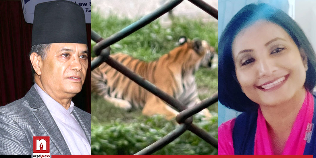 Central Zoo launches 'Adopt an Animal' campaign, CJ Rana adopts a pair of tigers