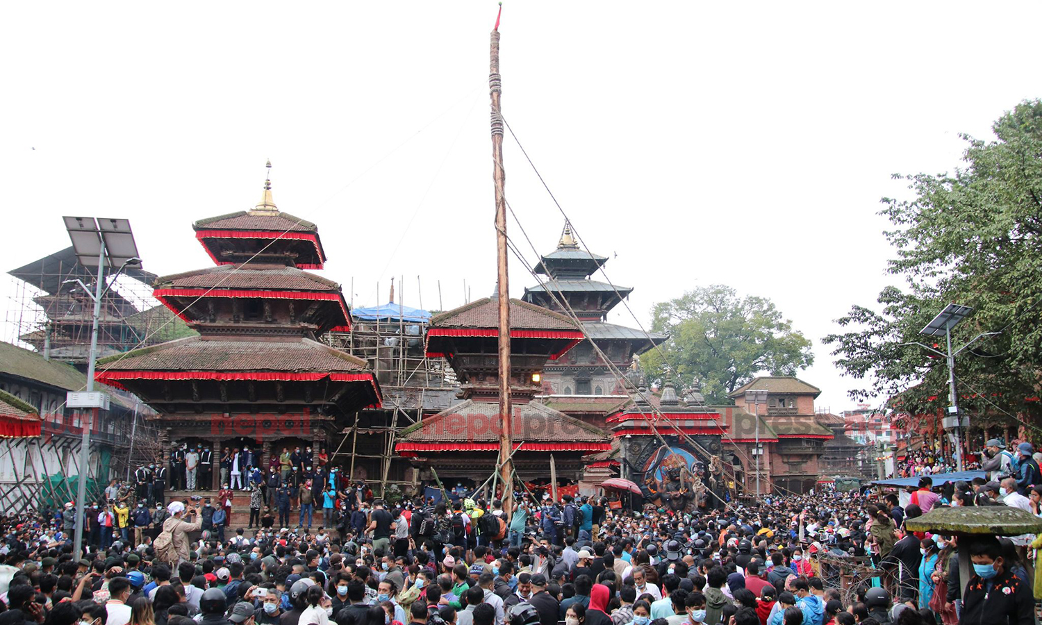 Indra Jatra festival formally begins today with erection of lingo (With photos)