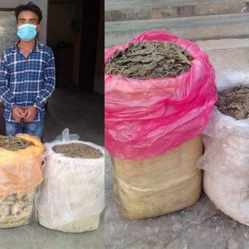 One nabbed with 53 kg marijuana