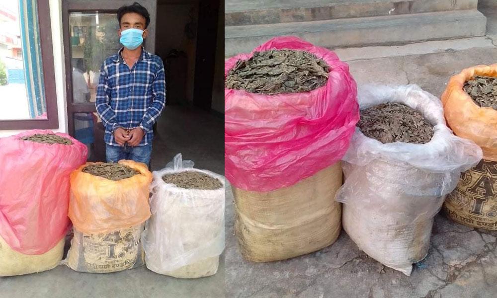 One nabbed with 53 kg marijuana in Udayapur